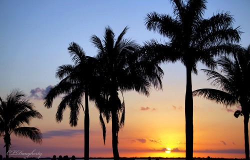 Tarpon Lodge Sunset Palms