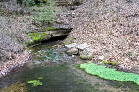 Cave spring watercress