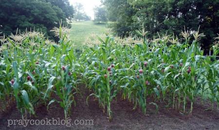 Corn July 22