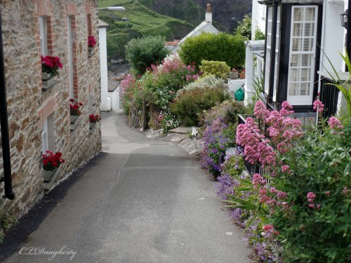 Port Isaac beautiful flowers