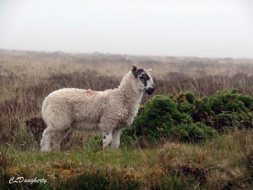Exmoor National Moor, England