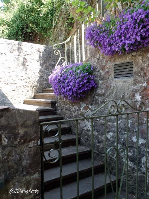 Violet Garden Wall Solitude